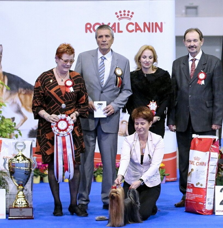 Best in Show (BIS) - Winners of the International Dog Show «DUO CACIB» Brno (Czech Republic), Sunday, 7 February 2016